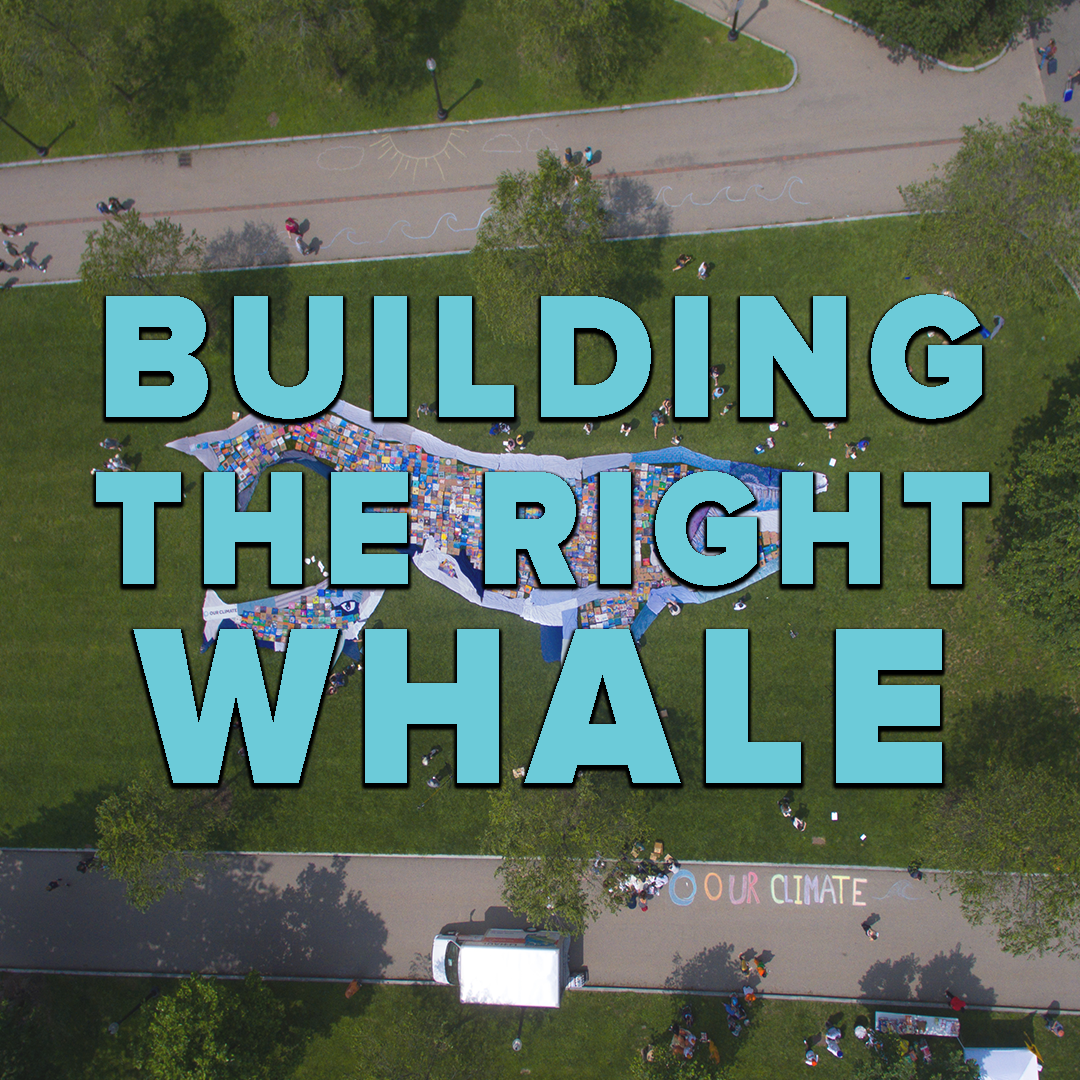 Building The Right Whale